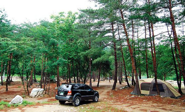 강원 양양 - 갈천솔밭가족캠핑장