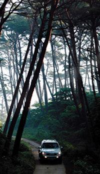 충남 태안 - 몽산포야영장