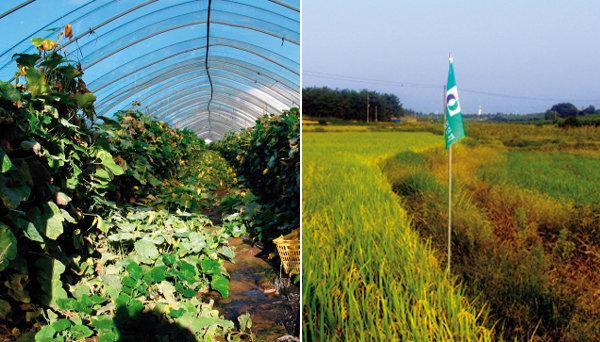 무늬뿐인 친환경농산물 판친다?