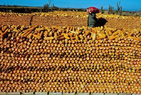 치솟는 곡물가격 … 식량위기 닥치나