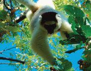 바오밥나무가 반기는 아프리카의 보석