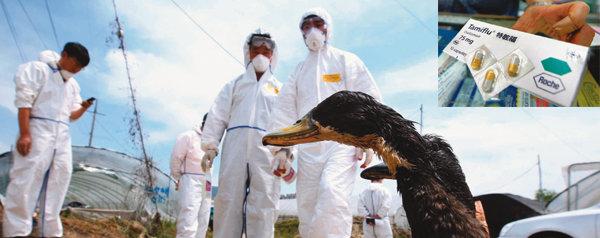 죽은 닭 쌓이는데 AI 백신 창고는 '텅'