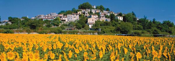 프랑스 프로방스 한번 들르면 영원히 살고픈 佛 최고의 전원 풍경