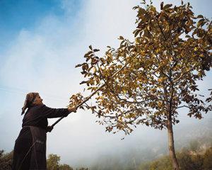그리스 에피루스 축복받은 땅과 사람들