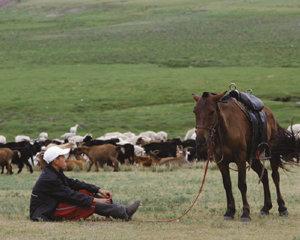 몽골 농장 개발 남북한 손잡을까