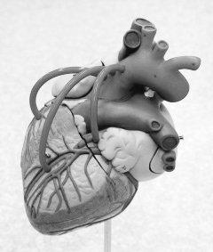 PART 1 심장 과 혈관