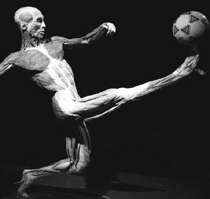 PART 3  뼈 관절 근육
