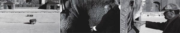 인간의 조건과 '장님 코끼리 만지기'