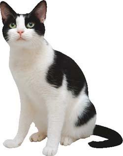 버르장머리 없는 고양이의 도도한 매력