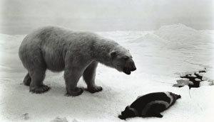 북극곰의 사진을 찍을 수 있는 곳은?