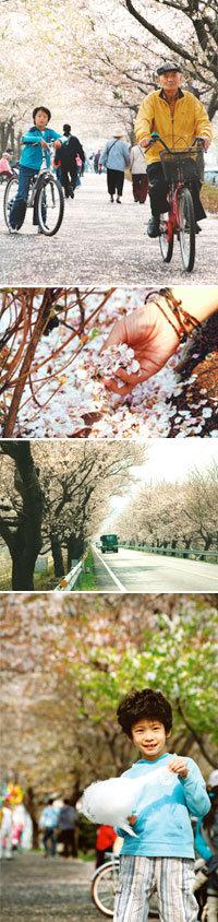 연분홍 추억 만드는 '꽃들의 수다'