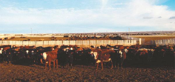 """[캐나다] """"엄격한 통제…  우리 쇠고기 안전"""" vs """"협상은 시기상조"""" [한국]"""