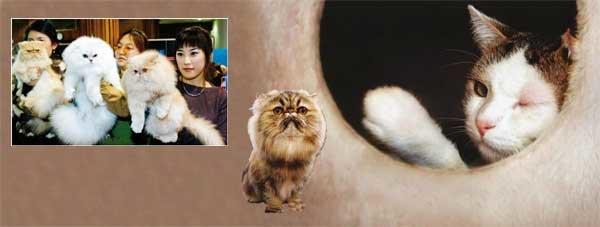 헐, 고양이가 사람을 조종한다고?
