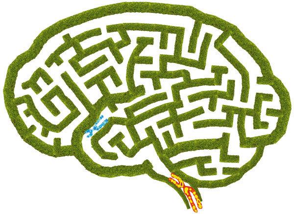70대에도 '뇌 청춘'은 있다