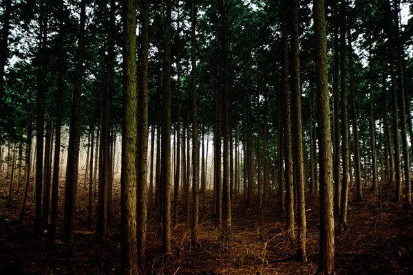 사람의 향기, 편백나무에 실려왔다