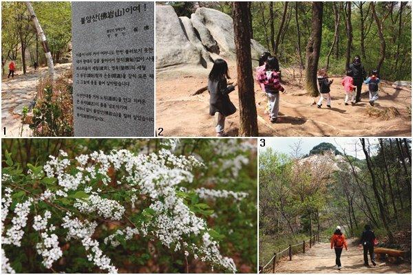 숲  속으로 걸어  들어간  반나절 5월의 꽃향기 날리고…