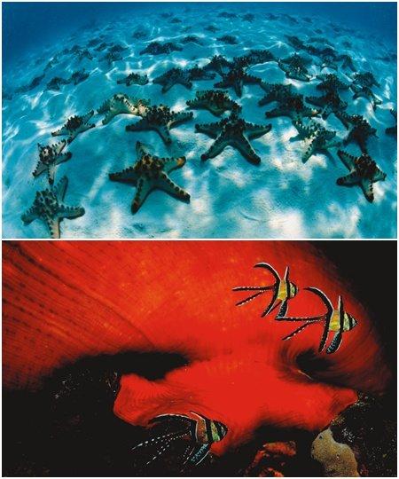 수중 사진작가 장남원의 '海' 展