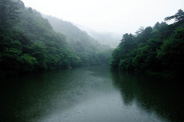 강원도 숲의 유혹