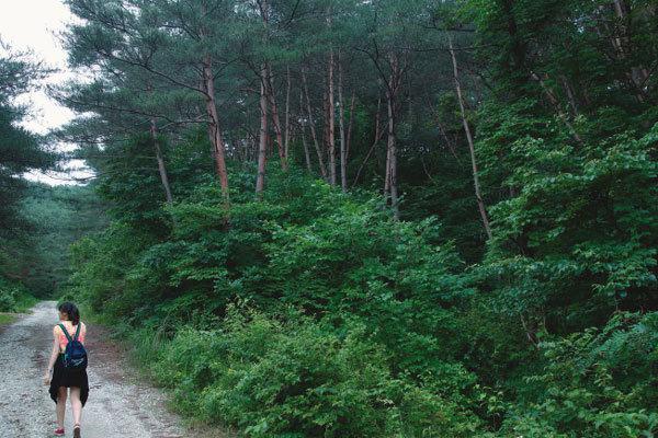 싸리나무 보라색 꽃망울아 한  많은 단종 뒷모습 아는가