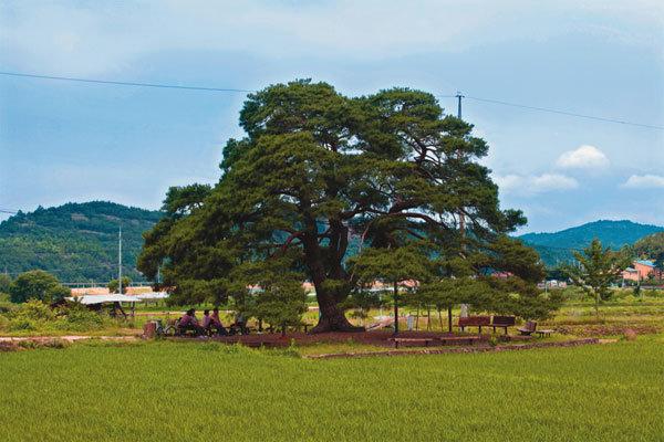 나무 그늘에 펼쳐진 여름 이야기