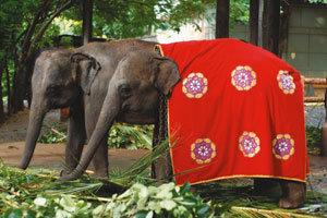 아기 코끼리 한 쌍 선물로 왔어요