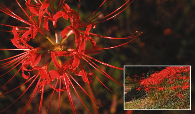잎이 죽어 붉은 꽃 피웠다