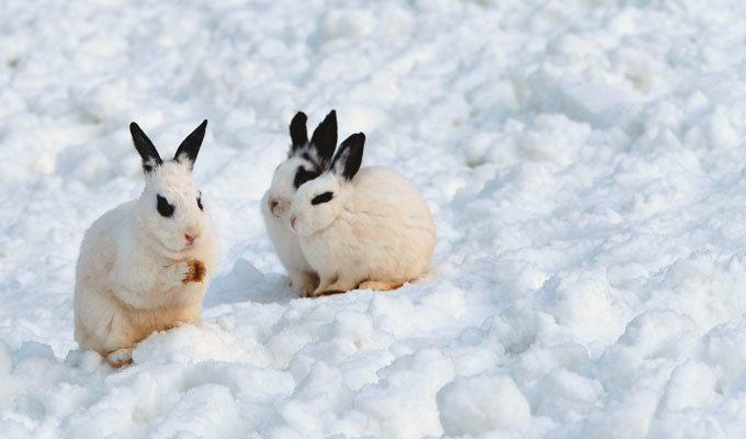 토끼처럼 열심히 살아봅시다!