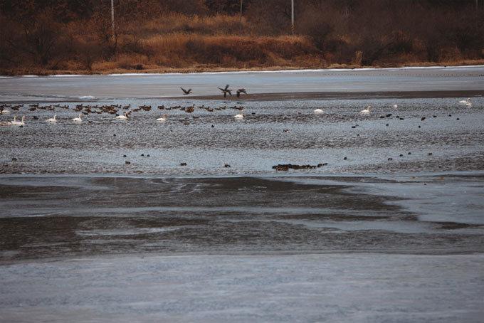 얼어붙은 '자연사 박물관' 겨울 철새 날아가고…