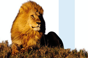 부끄러운 21세기 '동물의 왕국'