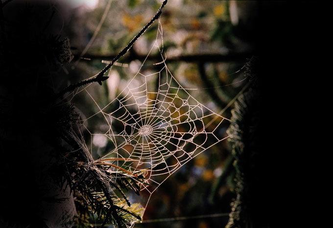 거미는 곤충이 아니라 동물이다