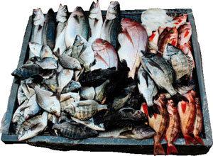 노는 바다 따라 생선의 맛이 다르다