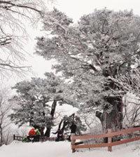 코끝 싸한 겨울 산 난, 눈꽃에 눈을 멀었다
