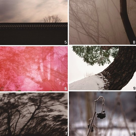 나무, 말을 걸어오다