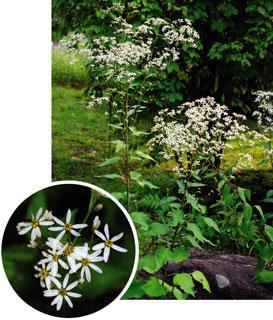 나물뿐 아니라 흰 꽃도 일품