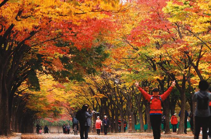 가을, 제 몸을 태운다