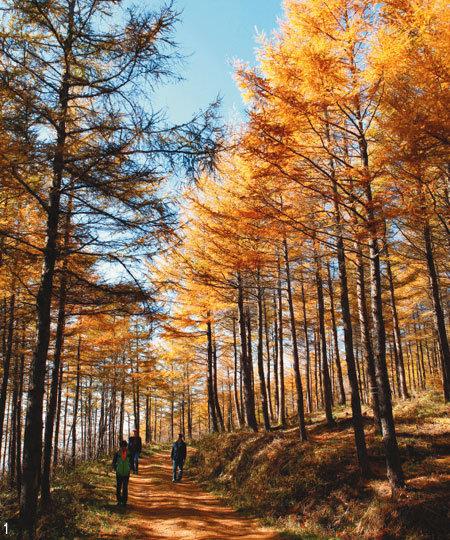 '하늘길' 진작 알았더라면 가을이 행복했을 것을