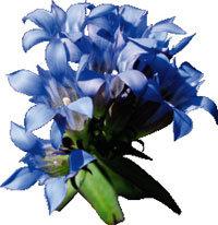 웅담만한 강장제… 꽃도 좋아라
