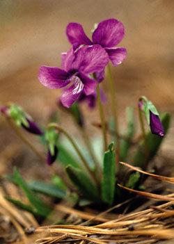 키 작은 꽃송이 봄 식탁에 딱!