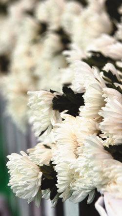 죽음, 봄꽃 같은 삶의 찬란한 광명