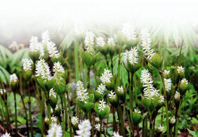 이렇게 고운 꽃이 '홀아비'라니