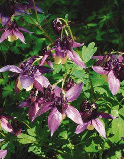 독특한 꽃 색깔… 관상용으로 딱!