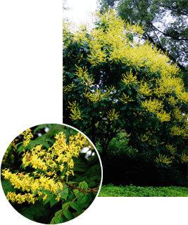 초록 여름 빛내는 '노란 꽃 군무'