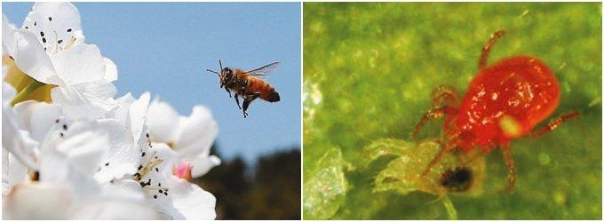 金을 기르는 '곤충산업'
