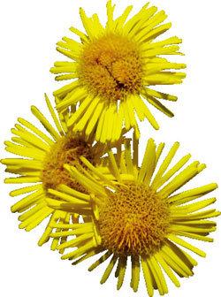 노란 꽃 속에서 미소 짓는 부처님