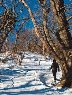 겨울 숲 '진경산수화' 예로구나
