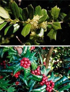 행운 부르는 크리스마스 '사랑의 열매'
