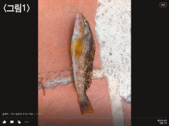 사람의 체질량지수 왜 물고기와 다를까요?