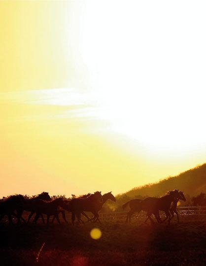 말들이 돌아오는 시간