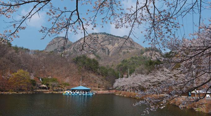 암수 마이봉 신비 느끼며 '벚꽃 엔딩'
