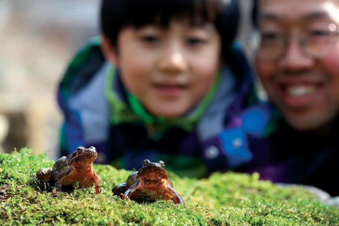 뛰어라! 개구리